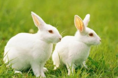 生肖兔和生肖鸡的合财吗?