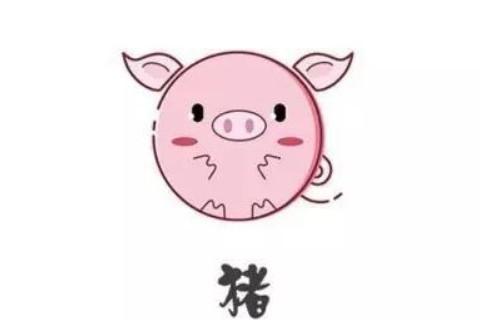 生肖猪和生肖鼠的合财吗?