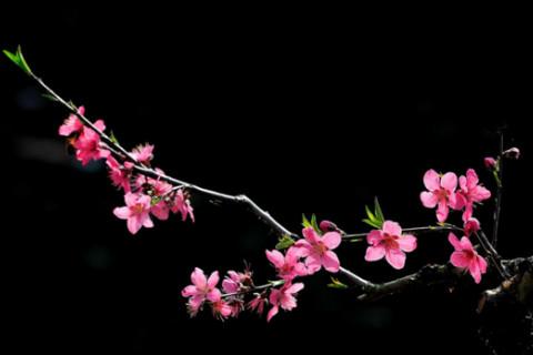 一个八字带桃花的女人怎么看  怎么样才会八字带桃花