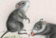 属鼠2022年运势及运程详解,202年属鼠人的全年每月运势完整版