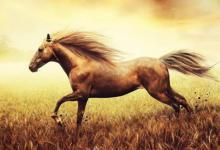 2021年属马运势及运程每月运程,生肖属马人2021年全年运程运气