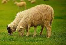 2021年属羊运势及运程每月运程,生肖属羊人2021年全年运程运气