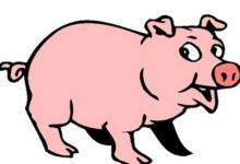 生肖猪和生肖猴的合财吗?