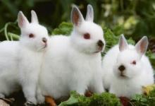 生肖兔和生肖龙的合财吗?