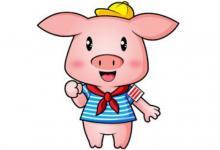 出生于1995年属猪的人2020年运程大全