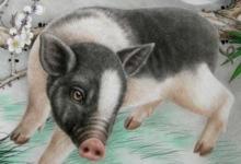 生肖猪人2020年6月份整体生肖运势