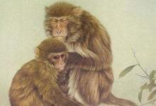 属猴2022年运势及运程详解,2022年属猴人的冲太岁全年每月运势完整版