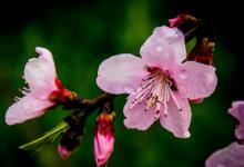 出生在农历几月的女人一生命犯桃花,桃花运很旺盛?
