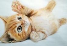 梦见猫进家里