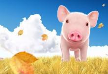 2020年属猪人全年运势,属猪的人命好吗