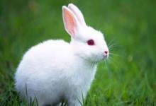 生肖兔和生肖牛的合财吗?