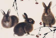 属兔2022年运势及运程详解,2022年属兔人的全年每月运势完整版