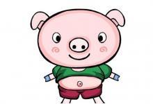 1983年属猪人在2020年的运势以及运程,37岁属猪人运势详解