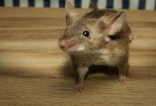 出生于1972年生肖鼠人命运如何?