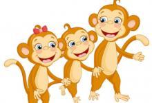 1980年属猴人在2020年的运势以及运程,40岁属猴人运势详解
