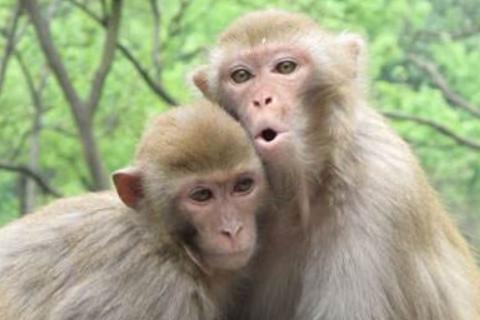 1944年属猴的人2021年运程  1944年77岁生肖属猴人2021年运势