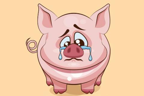 1971年属猪人2021年运程  1970年51岁生肖属猪人2021年运势