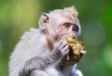 2004年属猴的人2021年运程  牛年命运如何