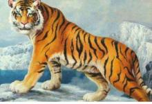 1986年属虎的人2021年运程  牛年命运如何