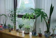 办公室摆放什么植物最招财