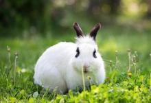 1951年属兔的人2021年运程  1951年70岁生肖鼠兔人2021年运势