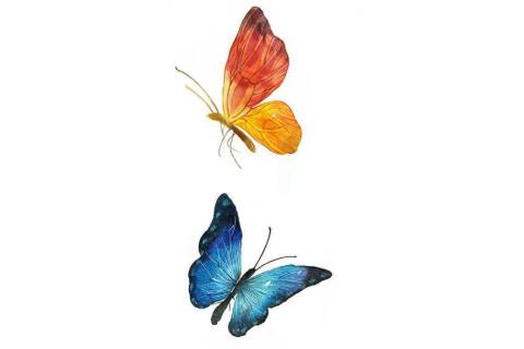 不同颜色的蝴蝶飞进店里是凶还是吉