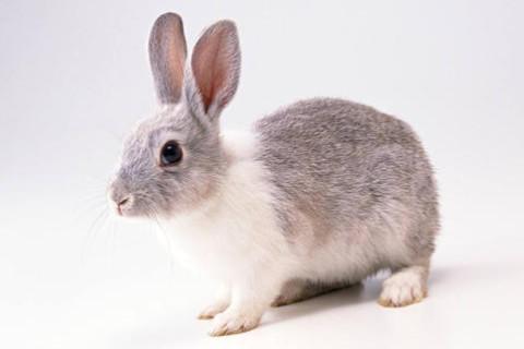 1963年属兔男女2021年运势  58岁生肖属兔男女2021年每月运势