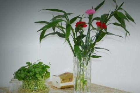 办公室风水植物注意事项