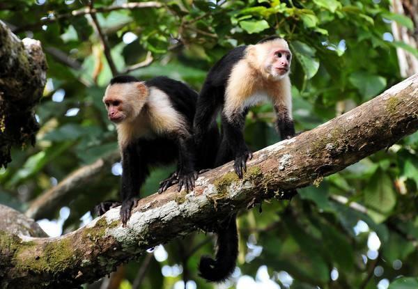 属猴2021年运势及运程 属猴的人2021年全年每月运程