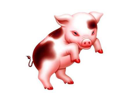 属猪人办公室风水布置