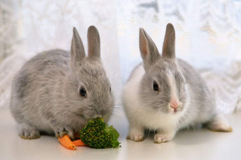 1975年属兔男女2021年运势  46岁生肖属兔男女2021年每月运势