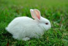 2011年属兔男女2021年运势  10岁生肖属兔男女2021年每月运势
