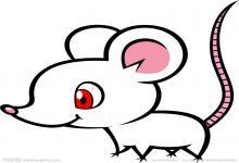 女鼠男猴的两人婚姻会幸福吗?(图文)