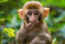 属猴人和属鼠人结婚好不好