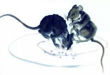 2020年属鼠10月份生肖运势解析!10月份属鼠运势如何?