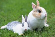 属兔人的贵人属相是谁
