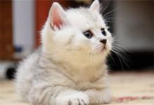 给猫咪一个好听的名字(图文)
