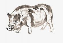 男的属羊女的属猪是适合结婚的一对吗?(图文)