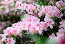 梦见鲜花代表什么意思