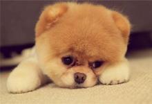 怎样给狗狗取名?(图文)