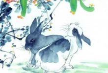 生肖属兔人2020庚子鼠年农历八月生肖运势好吗?