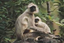 属猴人和属鸡人结婚好不好