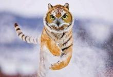 属虎人的贵人属相是谁