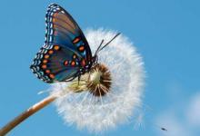 蝴蝶进店里是什么预兆