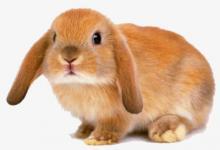 1963年属兔的人2021年运程  1963年58岁生肖属兔人2021年运势