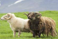 2003年属羊人2021年命运如何  如何化解犯太岁