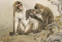 2020年下半年生肖猴运势分析