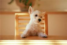 如何给狗狗取一个洋气的英文名?(图文)