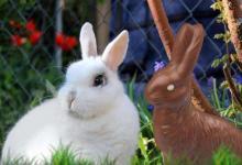 1987年属兔男女2021年运势  34岁生肖属兔男女2021年每月运势