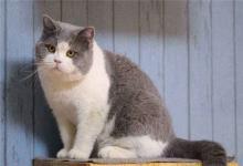 可爱洋气的宠物猫名字(图文)